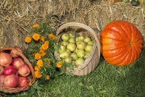 autumn harvest fruits and pumpkin