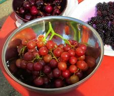 healthy fresh red grapes in bowl