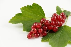 red currant berries on a green leaf