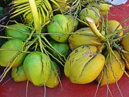 tasty healthy cocos fruit
