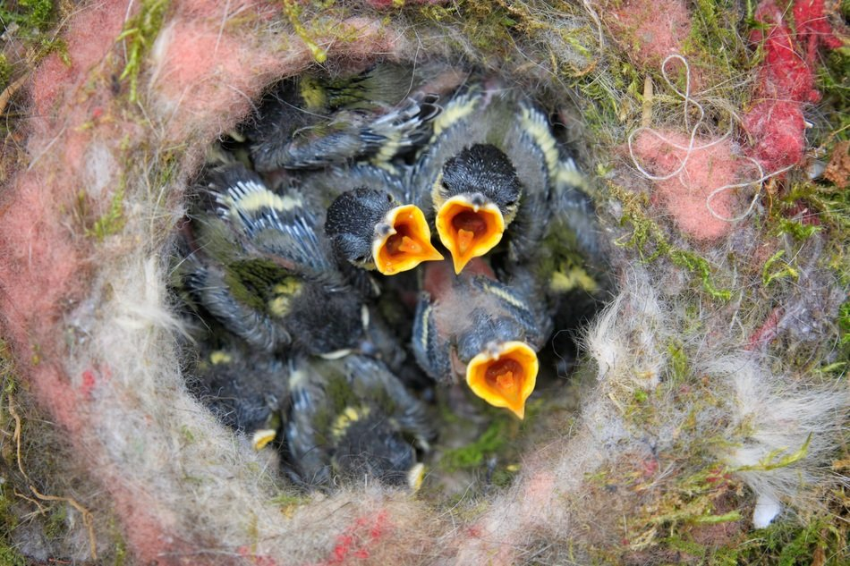 small chicks chicks in a bird`s nest