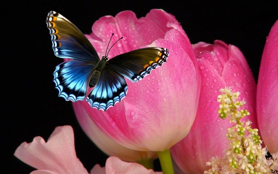 tulip flower and butterfly