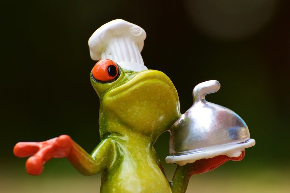 funny frog cooking eat