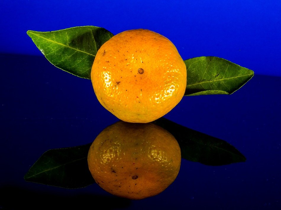 one orange mandarin citrus fruit