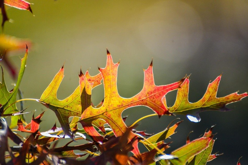 colorful bush leaves in autumn