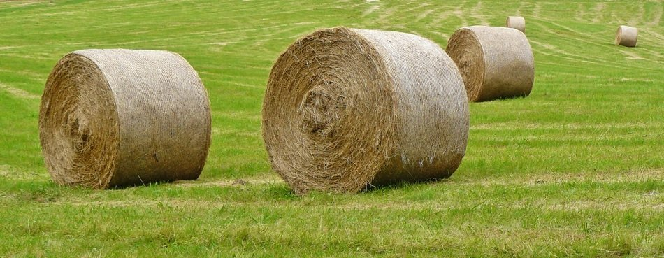 rolled straw bales on the green field