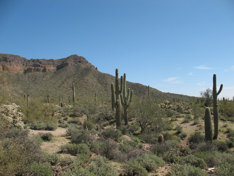 desert with cacti and green grass