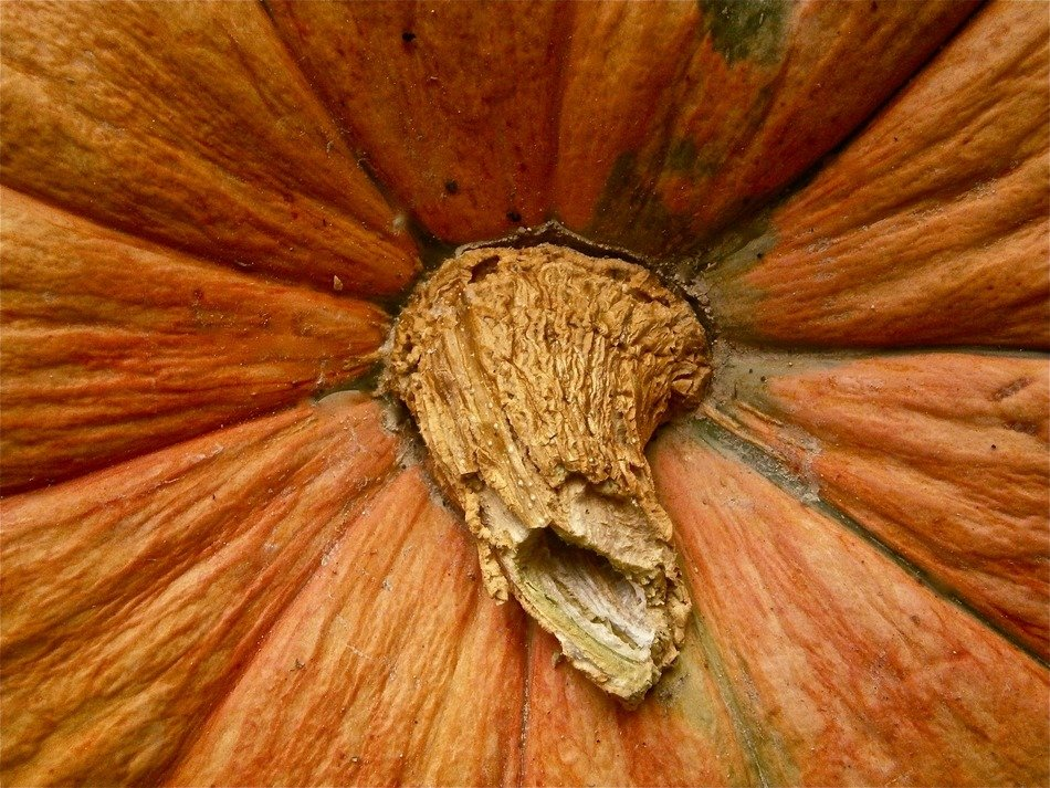 pumpkin vegetable autumn