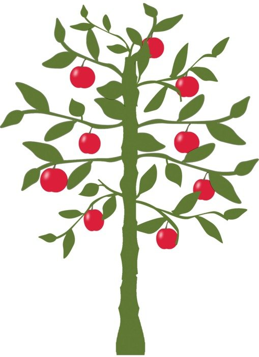 apple tree nature drawing