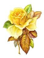 Drawing of yellow Roses
