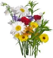 bouquet of summer flowers as a picture for clipart