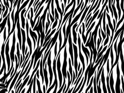 nice Zebra Print drawing