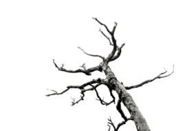 Dead Tree Branches drawing
