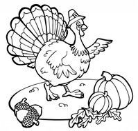 Thanksgiving, turkey wearing hat and pumpkins, Coloring Page