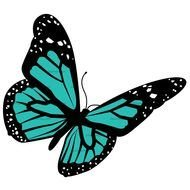 Teal Butterfly Clip Art drawing