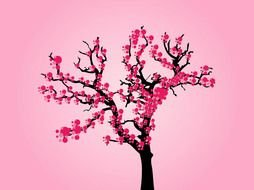 blooming japanese cherry on a pink background