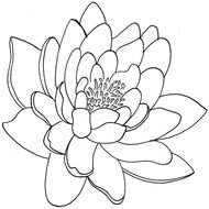 Simple Lotus Flower Tattoo Designs Images At Pixyorg