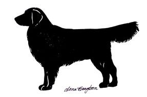 Golden Retriever Silhouette Images At Pixy Org