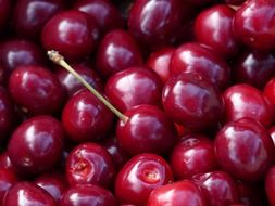 red sweet ripe cherries