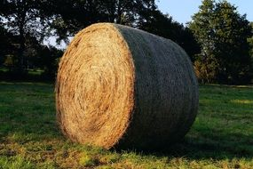 round hay bales on a field