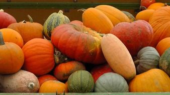 color tasty healthy pumpkins