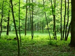 green grove in the forest in Poland