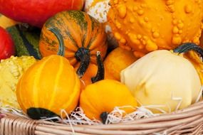 different types of pumpkin