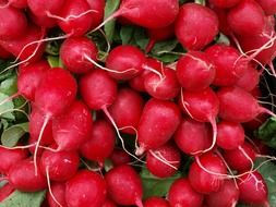 A pile of red radishes