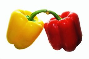 yellow and red pepper on a white background
