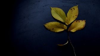 autumn leaves on a dark background