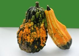 gourd as a decorative vegetable
