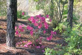 pink flowers on a forest path