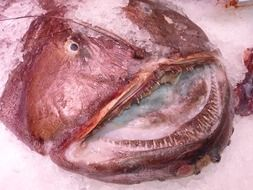 frozen fish head at the fish market