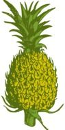 pineapple fruit food tropical yellow green drawing