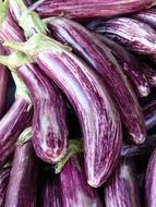 purple striped eggplants