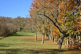 orchard apple trees autumn