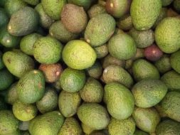 lot of green avocado