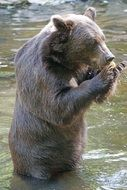 brown bear holding something in grips