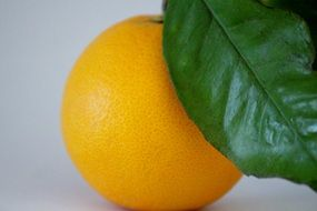orange fruit with vitamin C