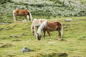three horses on mountain field