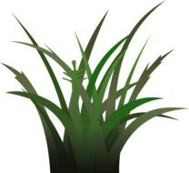 grass plant drawing