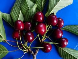 sweet fruit of cherry