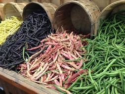 colorful bean plants on the market