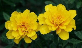 bright yellow garden flowers