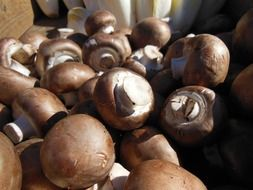 mushrooms brown close up
