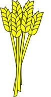 yellow ears of corn as an illustration
