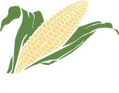 corn in a head as a graphic image