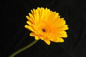 artificially-grown yellow flower