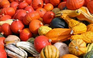 Harvest pumpkins of different varieties