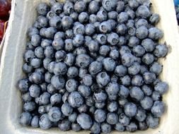 blueberries in a white basket